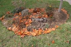 --Tulip tree autumn leaves