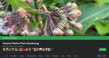 --Ontario Native Plant Gardening Facebook Group