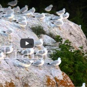 Psalm 138 - music video