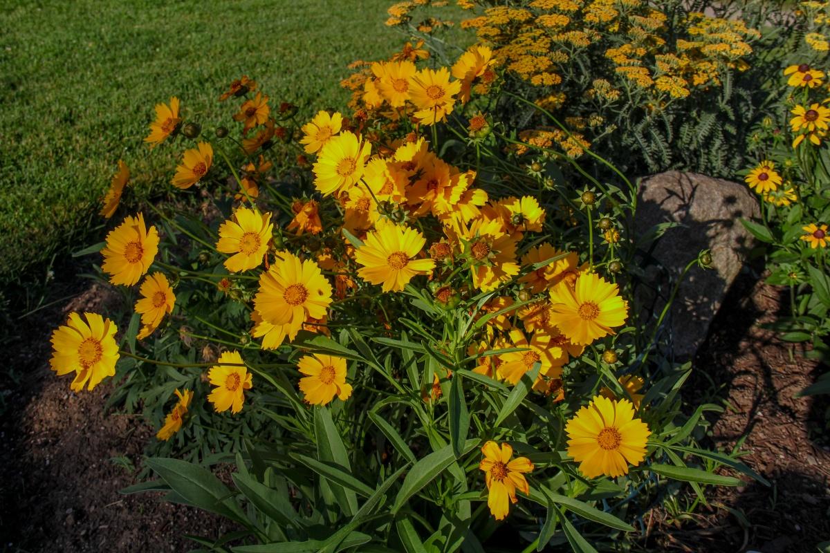 Garden 1 - Carolinian Sun
